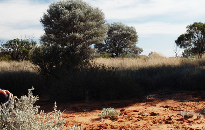 Wiluna gets environmental approval