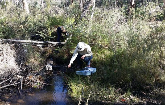 UNSW investigates protecting wetlands from UG mining