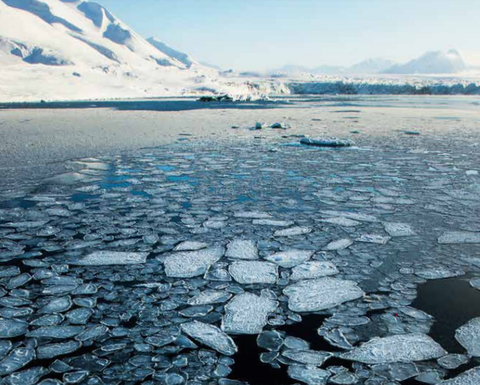 WWF calls for caution in the Arctic